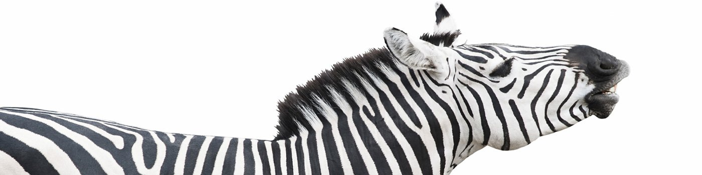 zebra clients of every stripe